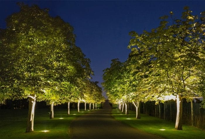 Path of trees during the night, lit by spot lights shining up from the ground